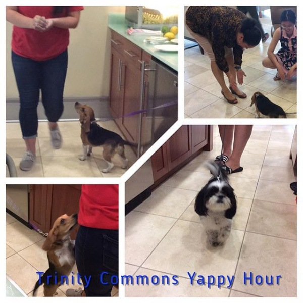 Our furry friends enjoyed Yappy Hour! Thank you to Camp Bow for hosting this event. #trinitycommons #campbowwow #thisisnwrliving